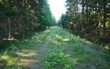 Banvallen norrut från Ljungby 2013-07-20