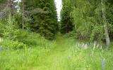 Igenvuxen banvall vid Alltorp 2012-06-23