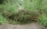 Nedfallet träd över banvallen norr om Råskänge, 2017-06-12
