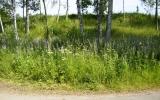 Platsen för Våmbsklevens hållplats 2010-07-04