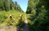 Rälsen ligger kvar 5 km söder om Värnamo 2013-07-20