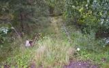 Spåren ligger kvar söder om Ljungby 2007-08-18